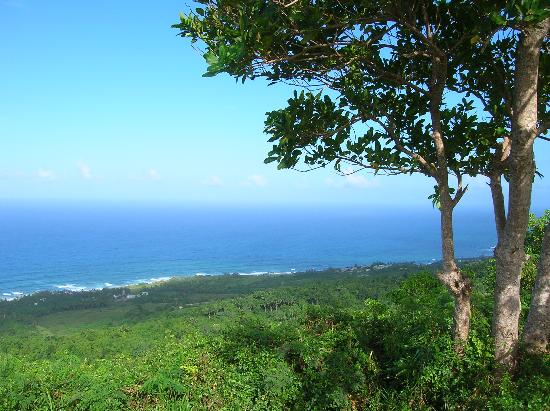 Barbados: Bathsheba Tree