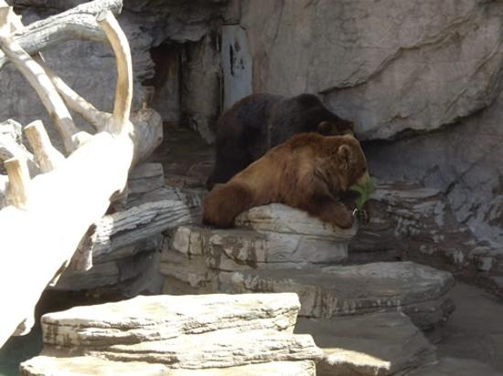 Denver, CO: Two Bears