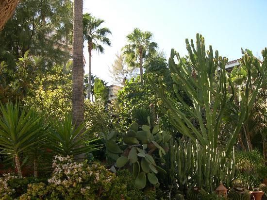 Hotel Parque Tropical : le jardin de l'hotel