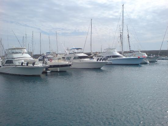 Hotel Costa Calero: Beautiful marina - and the fish are huge!