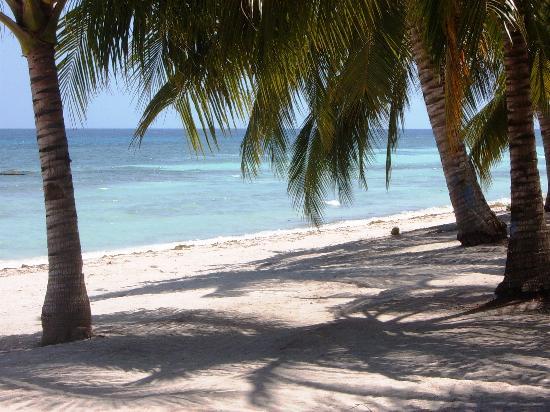 Amarela Resort: Hotel beach