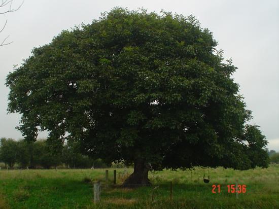 ويلوبانك موتيل: Tree, as seen from unit 8