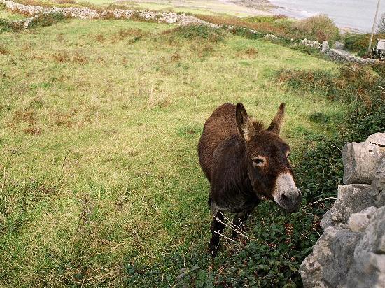 Aran Islands, Irlandia: inishmoor