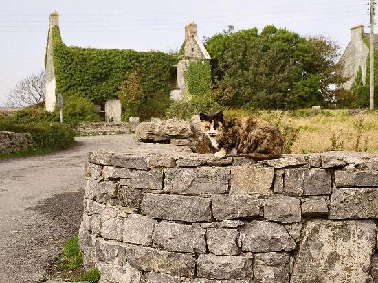 Aran Islands, Ireland: inishmoor