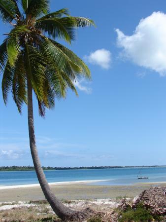 Mafia Island, Tansania: Palm tree