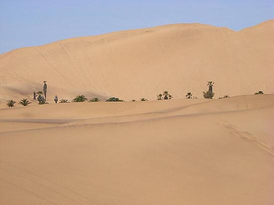 Namibya: Dune south of Swakopmund