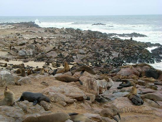 ‪ناميبيا: Cape Cross Cape Fur Seal Colony‬