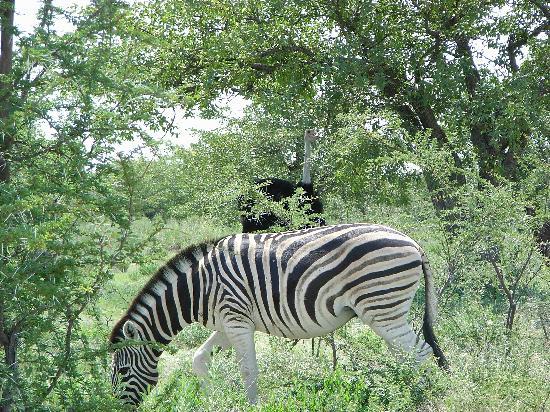 Namibia: Etosha National Park