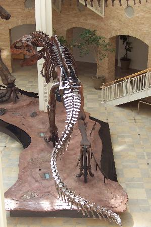 Fernbank Museum of Natural History: Oh boy it's dinosaurs!
