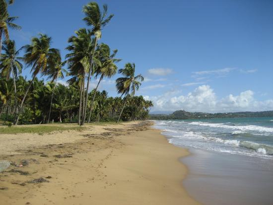 露西亞海灘飯店照片