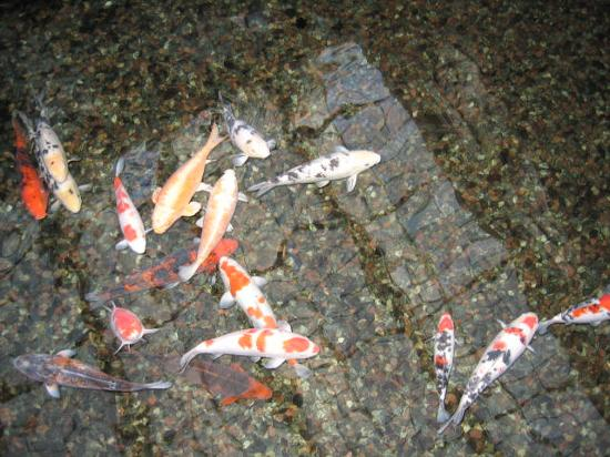 Scandic Infra City : fish in the pond