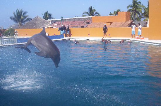 Things to do in Ixtapa Zihuatanejo, Mexico. Pacific Tours ...