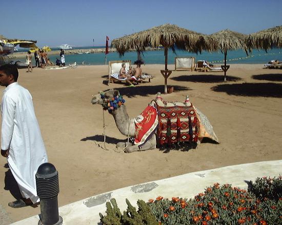 Hurghada SeaGull Beach Resort: Beach Taxi