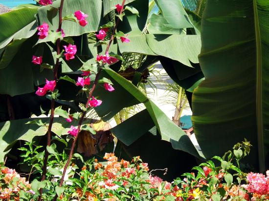 Pinewood Beach Resort & Spa: part of garden