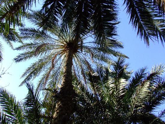 Djerba Explore: Oasis close to Touzer