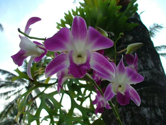 Khaolak Orchid Beach Resort: from the garden :)