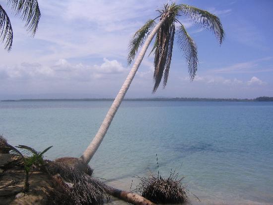 Провинция Бокас-дель-Торо, Панама: Bocas Del Drago beach, Bocas del Toro