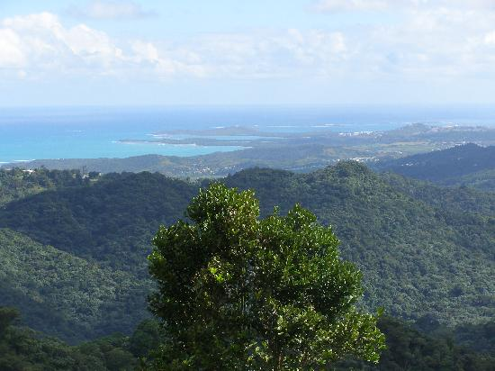 Porto Rico : View from El Yunque Rainforest