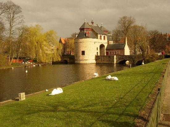 Bruges, Belgium: Swans Swimming by the North Gate