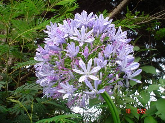 كارينجتون موتل: Flower near Unit 8