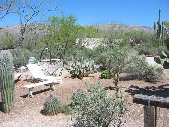 Double K Ranch Bed and Breakfast: Side yard of bed and breakfast