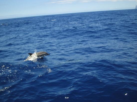Paraiso Maspalomas : Dolphins on trip