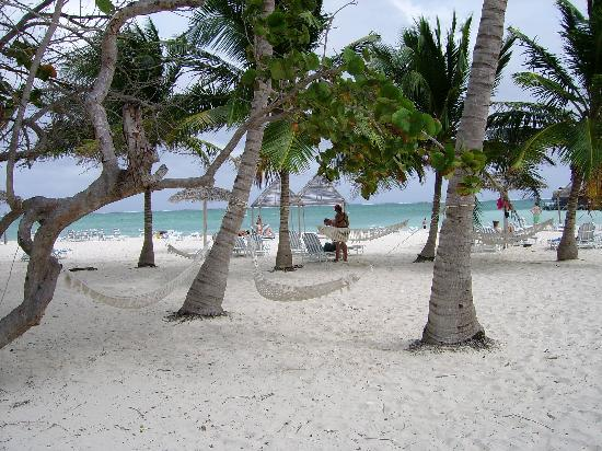 Beach Hammocks - Photo de Gran Club Santa Lucia, Playa Santa Lucia ...