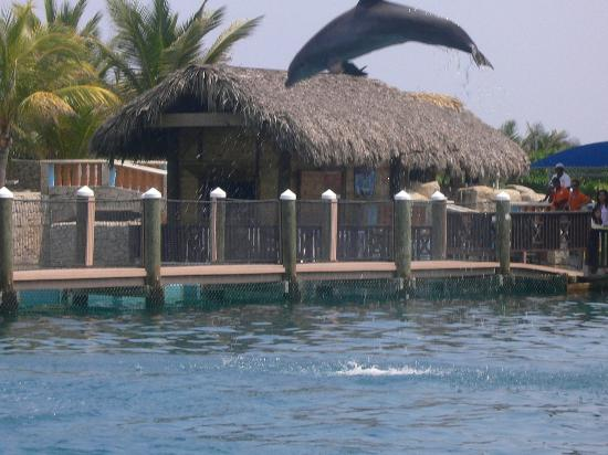 The Residence Suites at Lifestyle Holidays Vacation Resort: Dolphin show