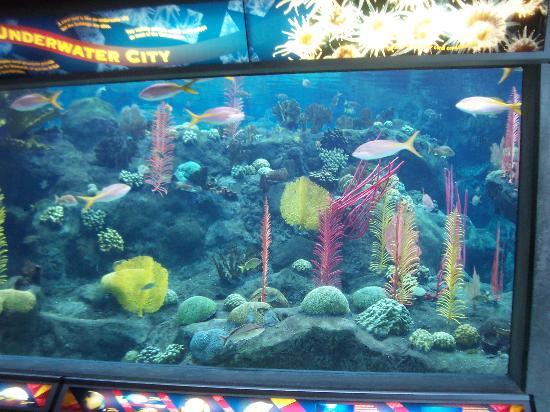 Coral Reef Picture Of The Florida Aquarium Tampa