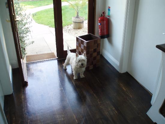 Pier House Bed and Breakfast: Toby the Concierge