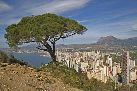Benidorm, Spain: Tree top hill