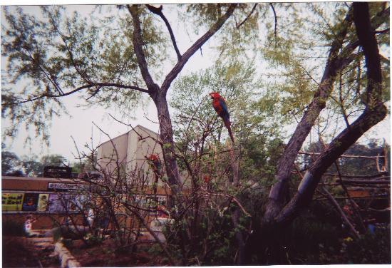 Birmingham Zoo: Parrots