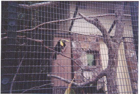 Birmingham Zoo: Toucan