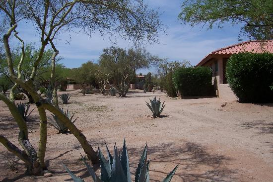 Rancho de los Caballeros: More of the grounds