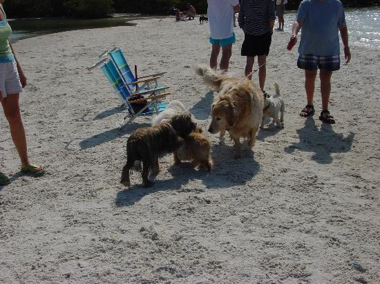 Bonita Springs, FL: Typical dog greeting ceremony