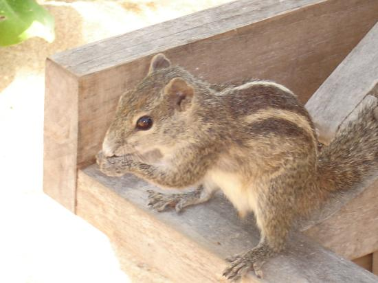 Heritance Ahungalla : chipmunk