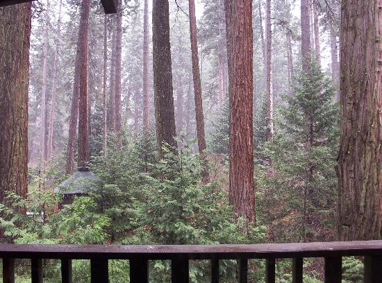 Yosemite Valley Lodge: View from room 4119