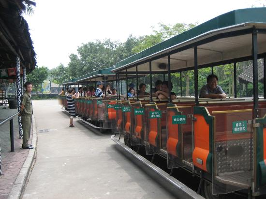Chimelong Hotel: Safari Park ride