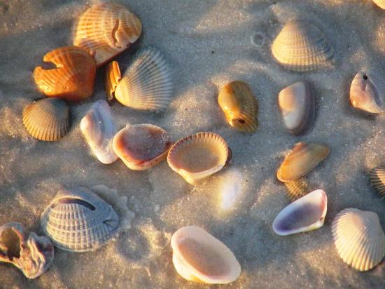 Port Saint Joe, FL: shells