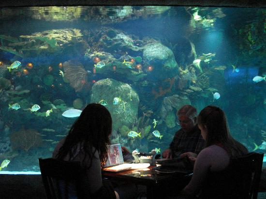 Aquarium Restaurant Houston Downtown Menu Prices