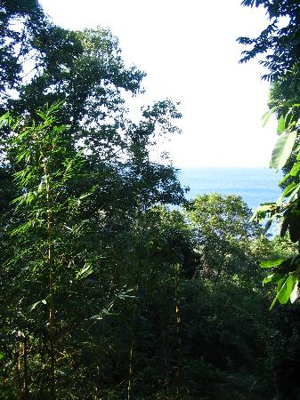 Marenco Beach & Rainforest Lodge : the view from the porch of our bungalow