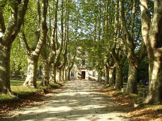 Le Chateau des Alpilles : Main driveway leading to the Chateau