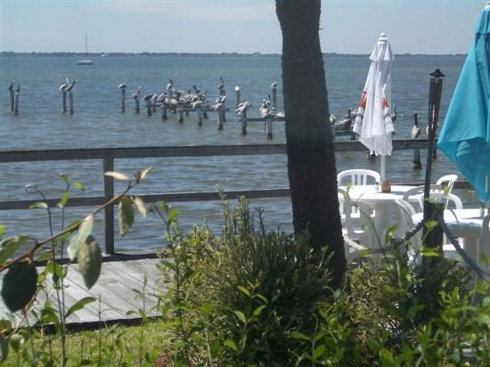 Lobster Shanty: View from the dining room
