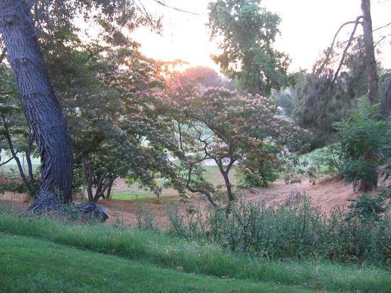 تيميكولا كريك إن: View from patio at sunrise.