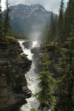 Alberta Picture