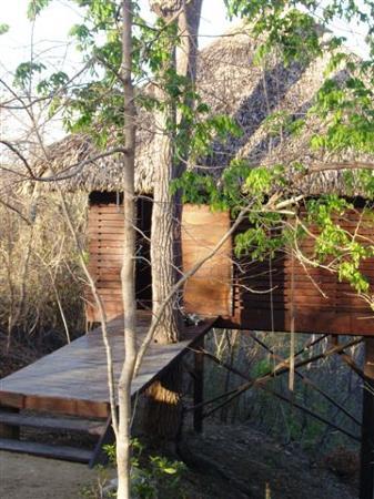 Buena Vista Surf Club: My beloved tree house