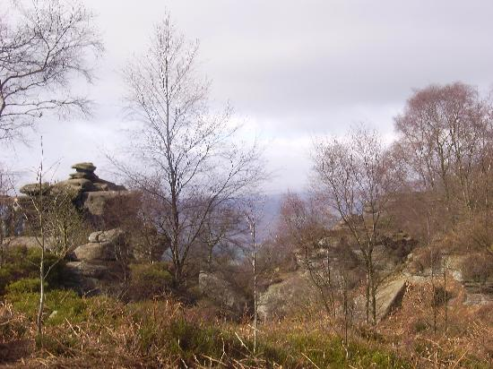 A view looking over Brimham Rocks to the moors