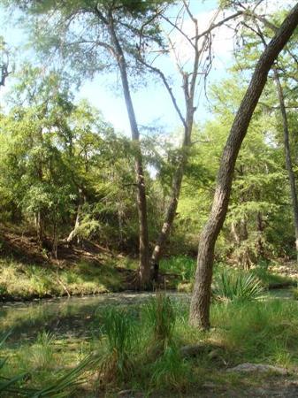 Foto de Spring Branch