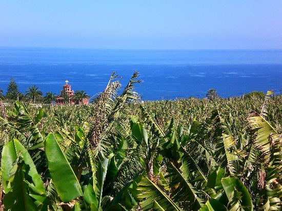 Hotel Alhambra: Local banana plantations on a walk down to the coast