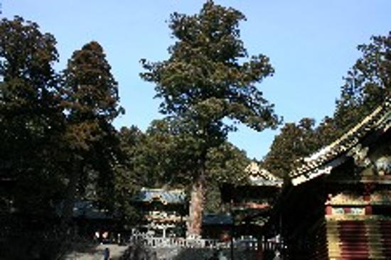 Nikko, اليابان: Looking up to the main part of the shrine